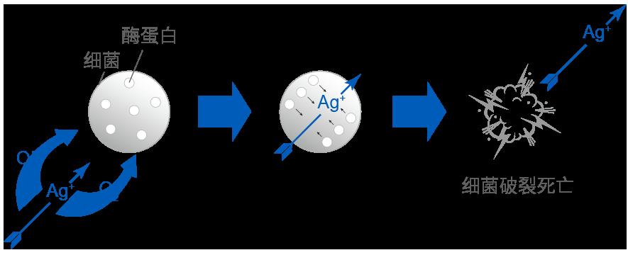 Antibacterial Mechanism of Silver