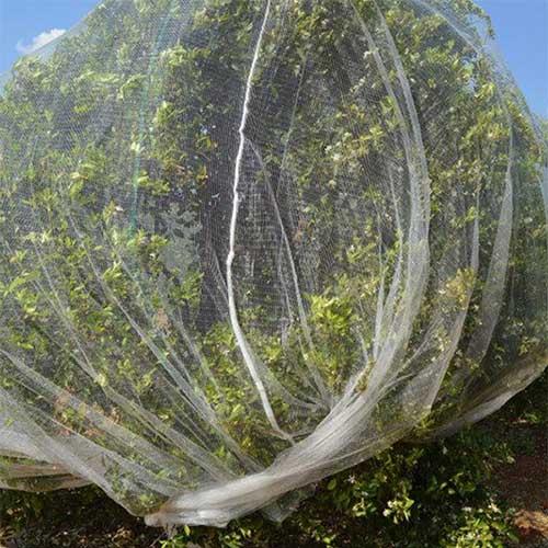 Anti Bee Net