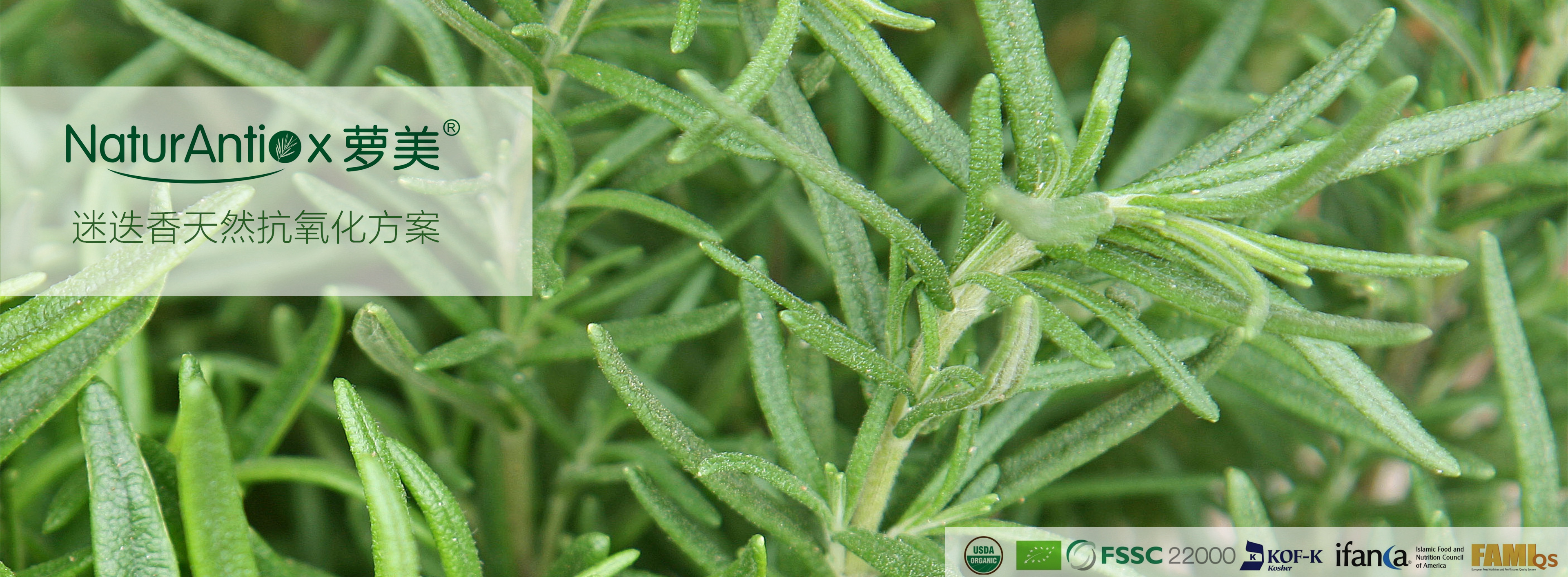 rosemary extracts-banner-CN