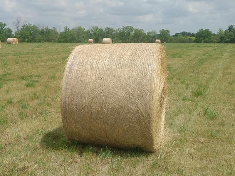 邁希爾捆草網