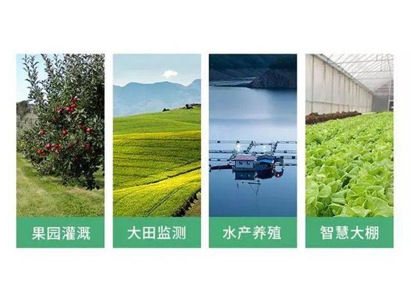 山東壽光蔬菜大棚-農田水肥一體化z智能節水灌溉工程111