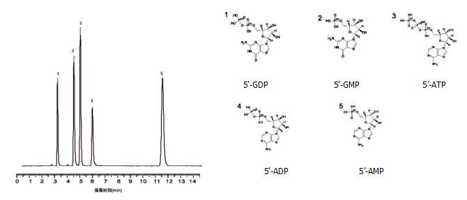 生命科学-核苷酸