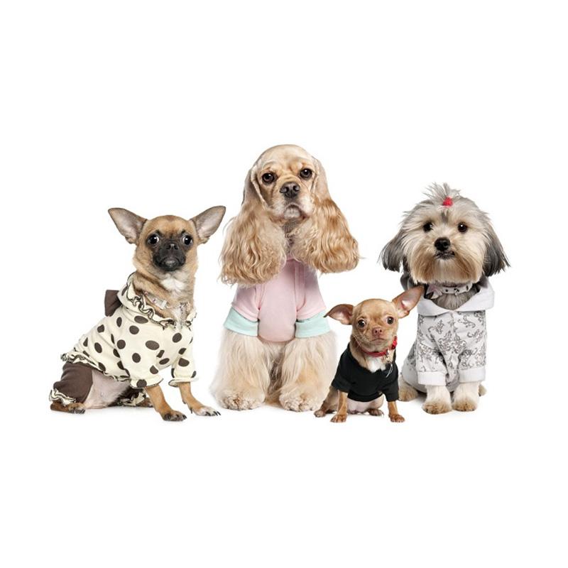 寵物墊用SAP